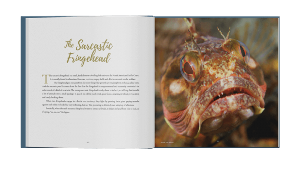 Ocean Metaphor Book Spread: Sarcatic Fringehead
