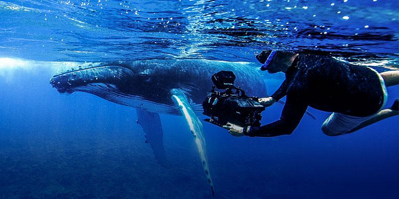 Gui filming a whale